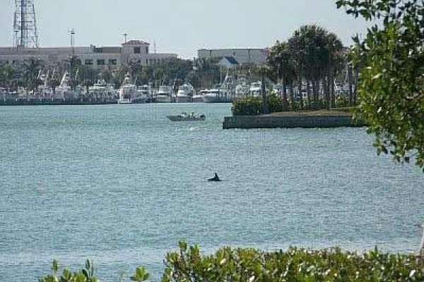 [Image: Watch Porpoises as You Relax at Our Beautiful Hutchison Island Waterfront Condo!]