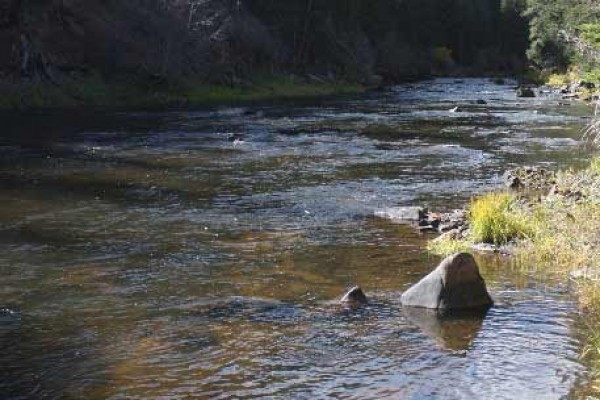 [Image: El Rancho Pequeno, Family-Friendly Premier Fly Fishing in Wyoming.]